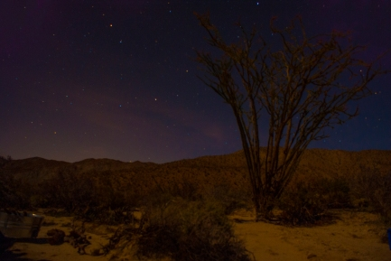 A ocotillo and its surrounding desert earth is illuminated by moonlight.