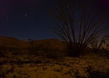 Campers can pitch a tent anywhere in the wilderness near the primitive Borrego Springs Desert Gardens campsite.