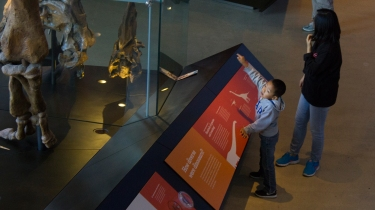 A boy points to the long neck of a dinosaur towering above him.