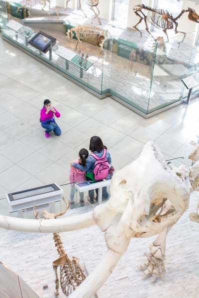 A group of tourists takes a photo in front of a Mammoth skeleton.