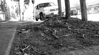 Dirt and dead twigs remain exposed at the base of a tree along Vermont Avenue.