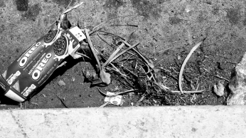An empty box of Oreos litters a Vermont Avenue gutter, accompanies by several twigs.