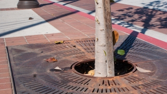 A grate covers the space surrounding a growing tree at USC, protecting roots and hiding brown dirt.